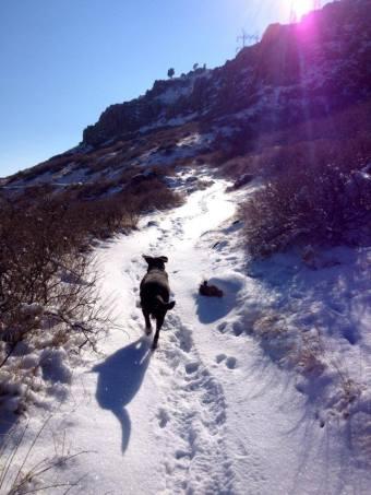 Niko on the trail