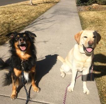 Luna & Cole